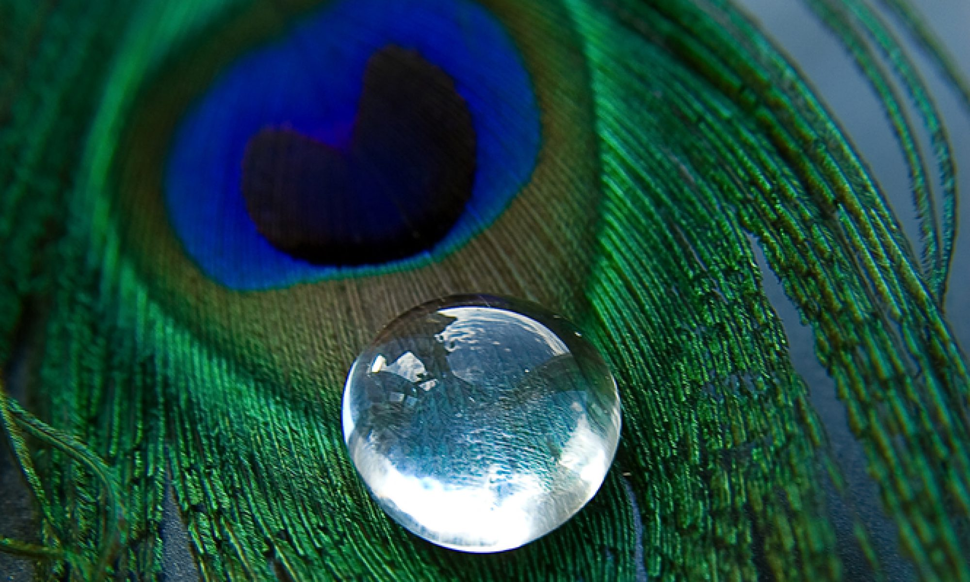 peacock tears
